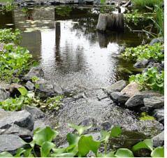 Озеленение берега водоема - важнейший этап в декорировании (озеленении) пруда