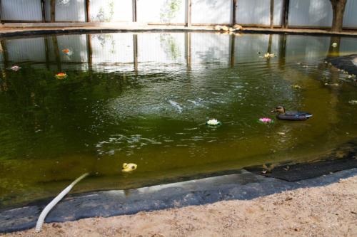 Строительство пруда для домашней рыбалки.